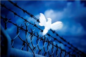 Peace-Essay